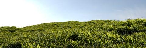Gras zum Horizont stockbilder