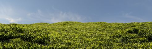 Gras zum Horizont lizenzfreie stockbilder