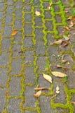 Gras zwischen Steinen Stockfoto