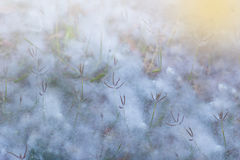 Grasabdeckung durch Baumwollreflex mit Beleuchtung Lizenzfreie Stockbilder