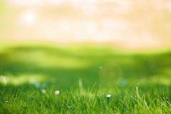Grasachtergrond Royalty-vrije Stock Foto