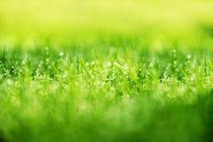 Grasachtergrond: Abstract groen gras natuurlijke als achtergrond met Royalty-vrije Stock Afbeelding