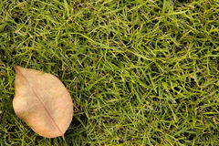 Grasachtergrond met een droge reaf Royalty-vrije Stock Foto