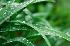 Grasachtergrond met regendalingen royalty-vrije stock afbeelding