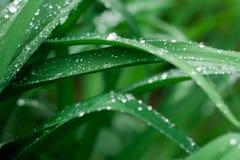 Grasachtergrond met waterdalingen stock foto's