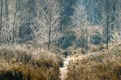 Grasanlagen und bereifte Bäume Stockfoto