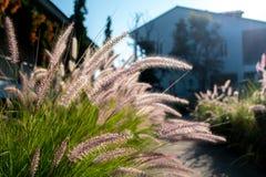 Grasanlagen während des Sonnenaufgangs Stockfoto