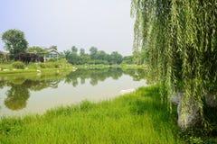 Grasartig lakeshore im sonnigen Sommer stockbilder