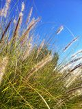 Grasartige Anlagen gegen blauen Himmel Stockfotografie