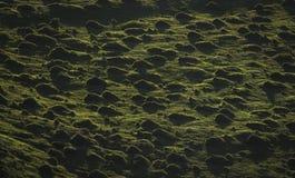 Grasartige Büschel auf einem Gebiet lizenzfreies stockbild