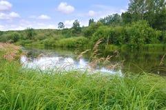 Grasartige Bank des wilden Waldflusses Lizenzfreie Stockfotos
