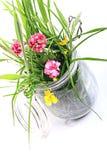 Grasartige Blumen in einem Potenziometer Lizenzfreies Stockbild