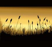 Grasartige Dawn Environment Stockbild