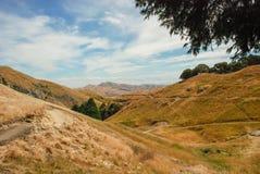 Grasartige Hügel in Hawkes-Bucht, Neuseeland Gelbe Grashügel mit Bergen im Hintergrund, nah an Weinkellereien stockfotografie