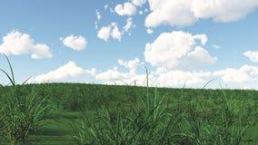 Grasartige Landschaft lizenzfreies stockfoto