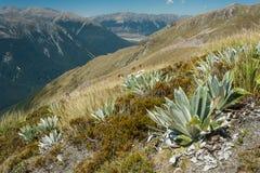 Grasartige Steigungen über alpinem Tal in Arthurs Durchlauf Stockfotos