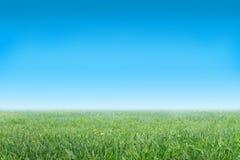 Grasartige Wiese und der blaue Himmel Stockbild