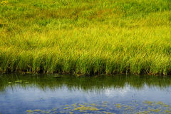 Grasartiger Frischwassersumpf Lizenzfreies Stockfoto