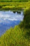 Grasartiger Frischwassersumpf Stockfotos