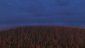 Grasartiger Hügel bei Sonnenuntergang, Himmel-Hintergrund Stockfotos