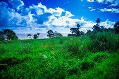 Grasartiger Hügel und Ozean im Hintergrund, Hilo Hawaii Stockfotografie