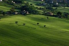 Grasartiger H?gel an einem sonnigen Nachmittag in Italien stockfotografie