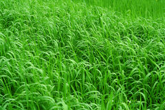 Grasartiger Hintergrund Stockbild