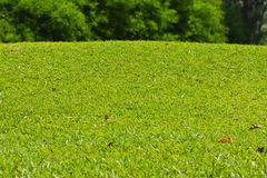 Grasartiger kleiner Hügel neben Golfgrün Lizenzfreies Stockbild