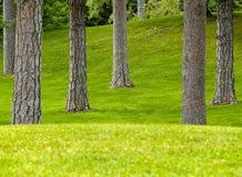 Grasartiger Park und Bäume lizenzfreie stockbilder