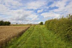 Grasartiges bridleway und Weizen Stockfotos
