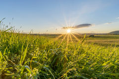 Grasartiges Feld bei Sonnenaufgang Lizenzfreie Stockfotos