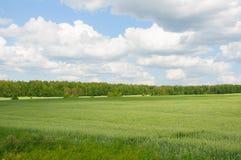 Grasartiges Feld an einem Sommertag Stockfoto