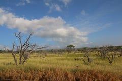 Grasartiges Feld mit bloßen Bäumen Stockfotos