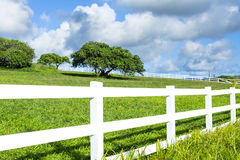 Grasartiges Feld mit weißem Zaun Stockbilder