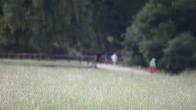 Grasartiges Feld und Rüttler stock footage