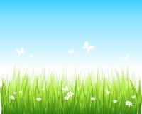 Grasartiges grünes Feld und blauer Himmel stock abbildung