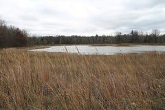 Grasartiges Sumpfgebiet Stockbild