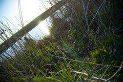 Grasartiges Ufer Lizenzfreie Stockbilder