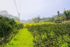 Grasartiges und blühendes Ackerland am sonnigen Frühlingsmittag Lizenzfreie Stockfotografie