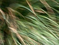 Grasbeschaffenheit Stockfoto