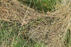 Grasbeschaffenheit - Hintergrund stockfoto