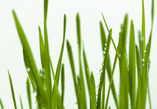Grasblätter Lizenzfreies Stockbild