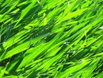 Grasblätter Lizenzfreies Stockfoto