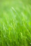 Grasblätter Stockfoto