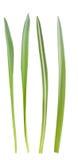Grasblätter Lizenzfreie Stockfotografie