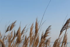 Grasblätter auf dem Strand Lizenzfreies Stockfoto
