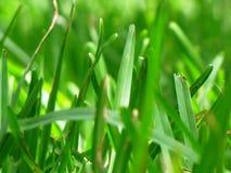Grasbladen Royalty-vrije Stock Afbeeldingen