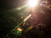Grasbloem in diepe wildernis Stock Afbeelding