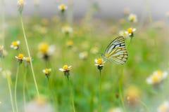 Grasbloem en vlinder Royalty-vrije Stock Afbeeldingen