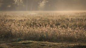 Grasbloem en zonneschijn Royalty-vrije Stock Afbeelding